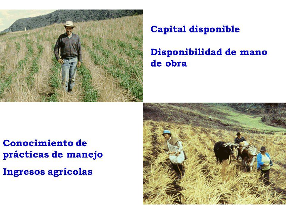 Conocimiento de prácticas de manejo Ingresos agrícolas Capital disponible Disponibilidad de mano de obra