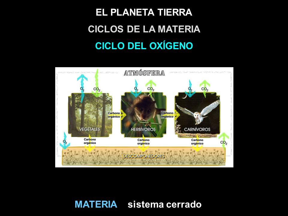 EL PLANETA TIERRA sistema cerradoMATERIA CICLOS DE LA MATERIA CICLO DEL OXÍGENO
