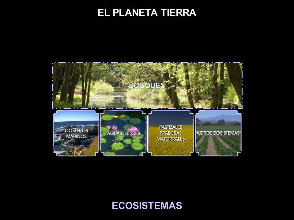 EL PLANETA TIERRA BOSQUES ECOSISTEMAS