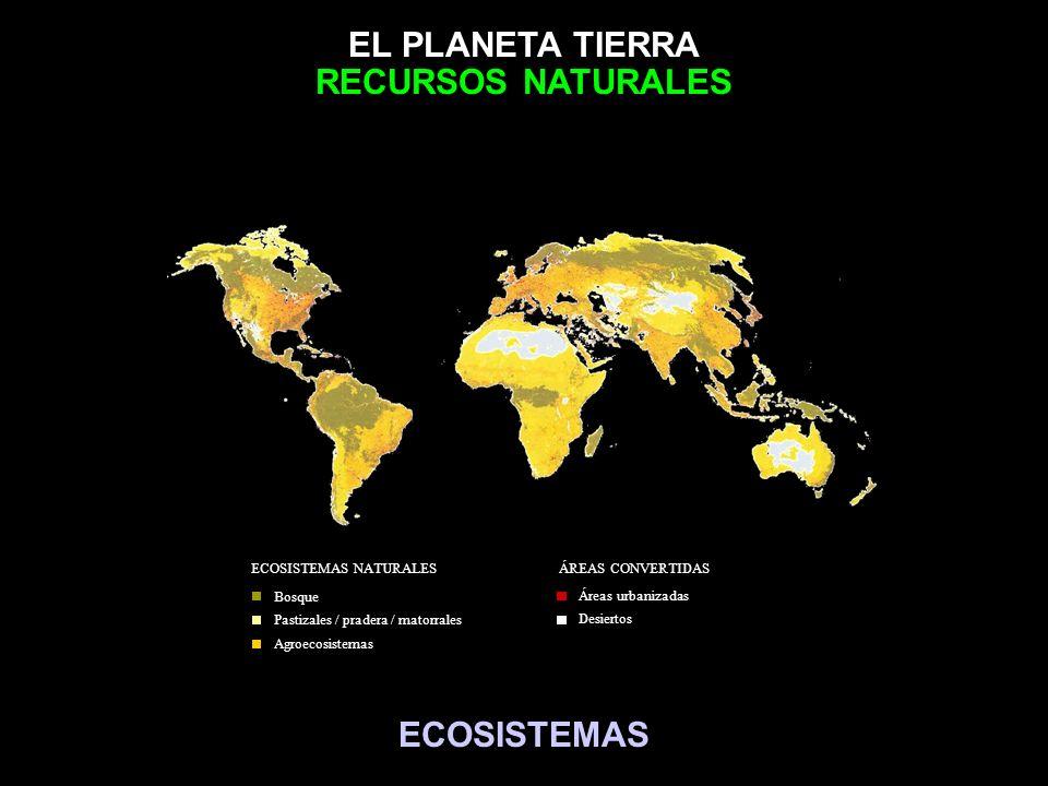 EL PLANETA TIERRA Bosque Pastizales / pradera / matorrales Agroecosistemas ECOSISTEMAS NATURALES Áreas urbanizadas Desiertos ÁREAS CONVERTIDAS ECOSIST