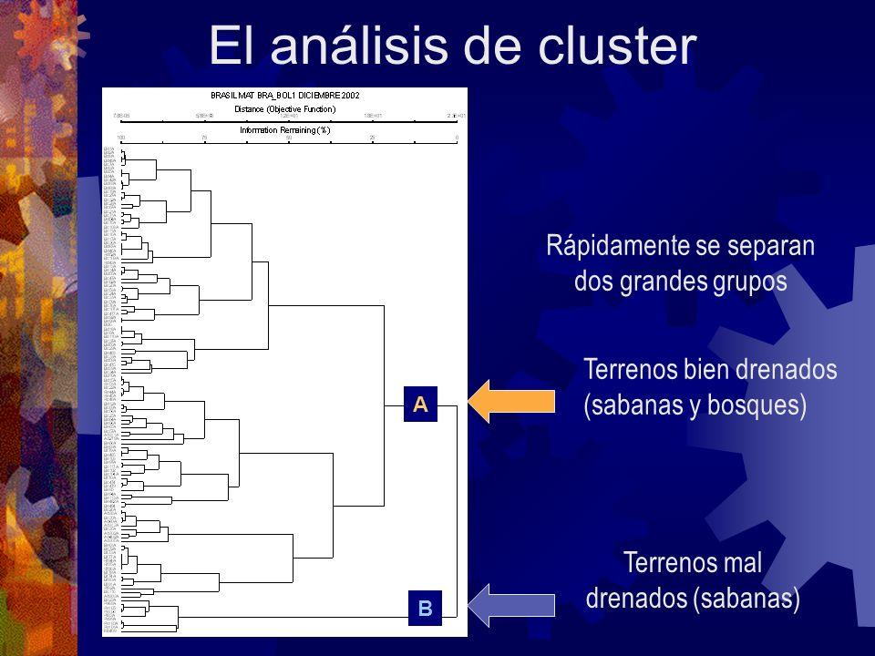 El análisis de cluster A B Rápidamente se separan dos grandes grupos Terrenos bien drenados (sabanas y bosques) Terrenos mal drenados (sabanas)