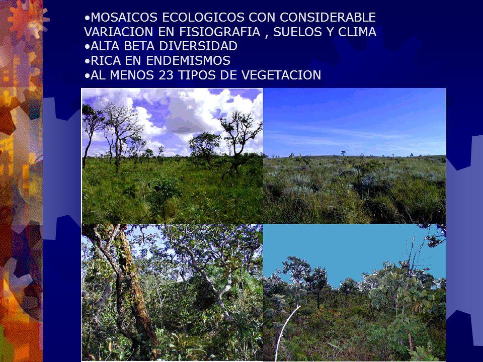 Evaluar la heterogeneidad ecológica MAPA ECOLOGICO IMÁGENES SATELITALES MAPAS TEMATICOS -MUESTREOS DE SUELOS, VEGETACION, ETC -ANALISIS DE LABORATORIO -MAPAS ECOLOGICOS FINALES USAR INFORMACION PREEXISTENTE: MAPAS DE VEGETACION ECOREGIONES (Dinerstein et al., 1995; WWF, 2000) MAPAS DE COBERTURA DEL TERRENO MAPAS DE SISTEMAS DE TIERRAS ESTUDIO DE NOVO
