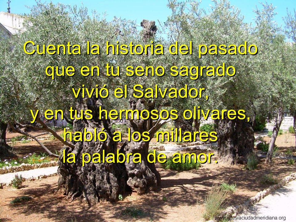 Cuenta la historia del pasado que en tu seno sagrado vivió el Salvador, y en tus hermosos olivares, habló a los millares la palabra de amor. www.igles