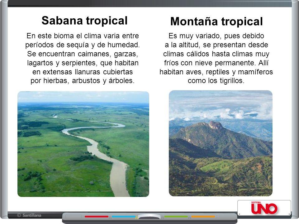 Sabana tropical En este bioma el clima varia entre períodos de sequía y de humedad.