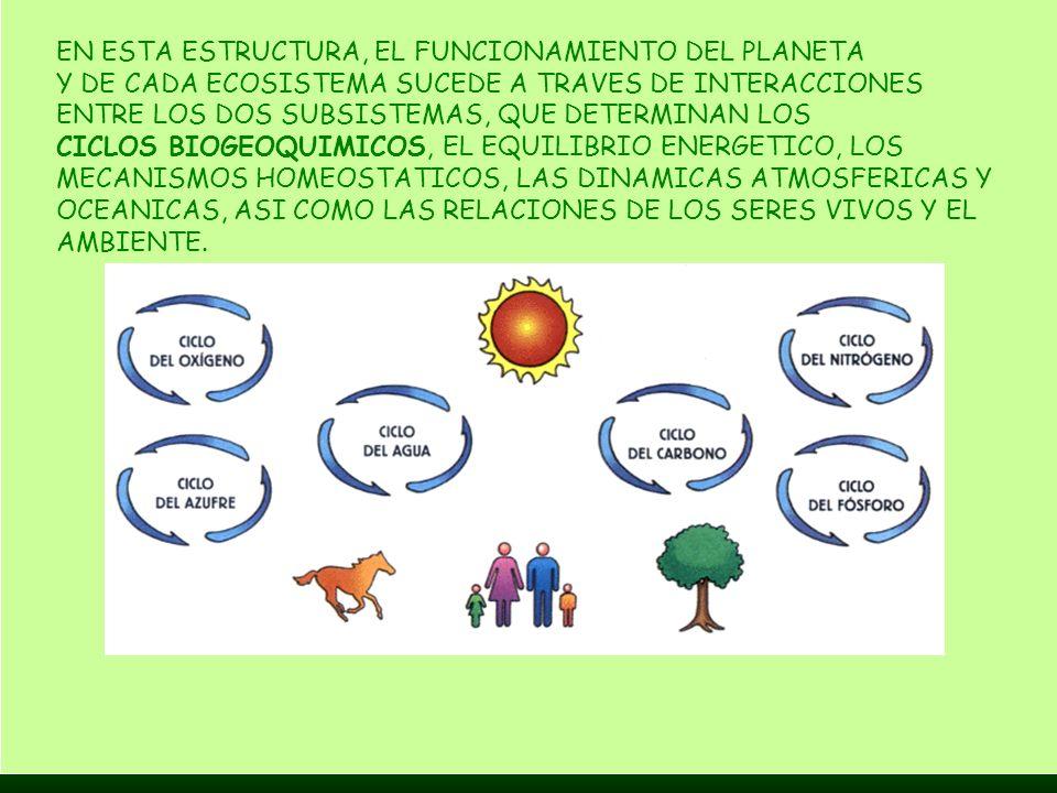 EN ESTA ESTRUCTURA, EL FUNCIONAMIENTO DEL PLANETA Y DE CADA ECOSISTEMA SUCEDE A TRAVES DE INTERACCIONES ENTRE LOS DOS SUBSISTEMAS, QUE DETERMINAN LOS