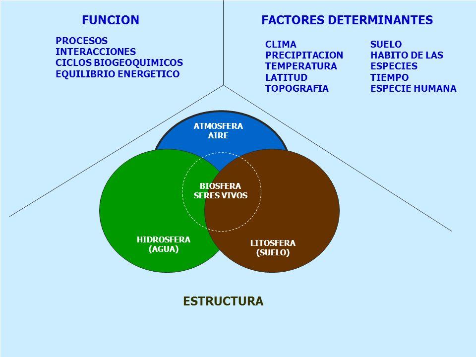 ATMOSFERA AIRE BIOSFERA SERES VIVOS HIDROSFERA (AGUA) LITOSFERA (SUELO) ESTRUCTURA FUNCION PROCESOS INTERACCIONES CICLOS BIOGEOQUIMICOS EQUILIBRIO ENE