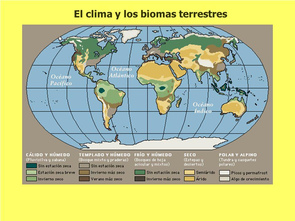 El clima y los biomas terrestres
