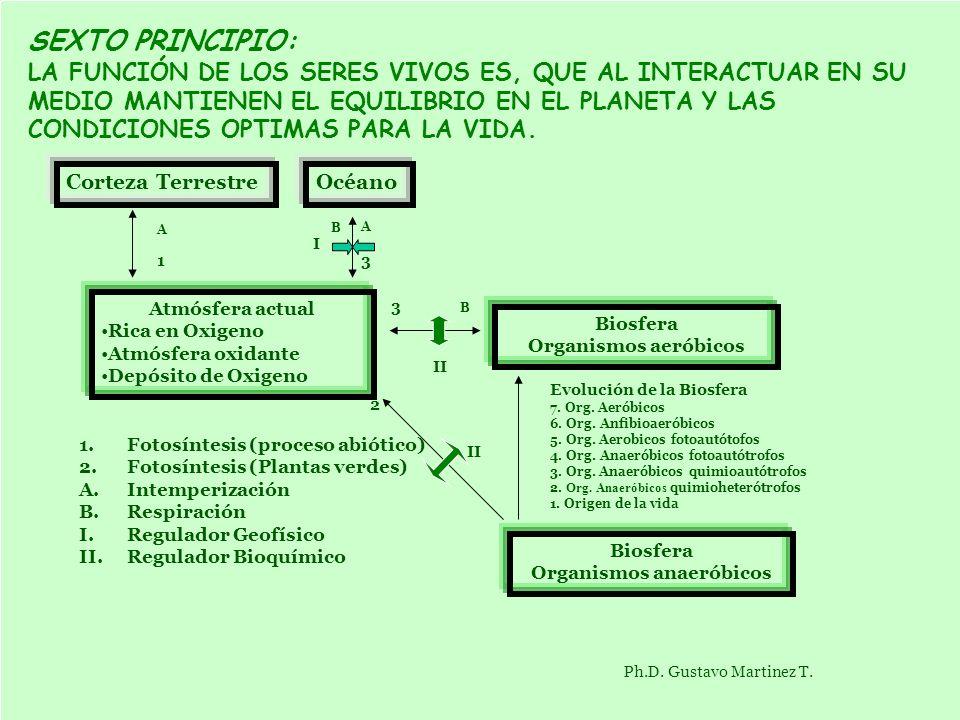 SEXTO PRINCIPIO: LA FUNCIÓN DE LOS SERES VIVOS ES, QUE AL INTERACTUAR EN SU MEDIO MANTIENEN EL EQUILIBRIO EN EL PLANETA Y LAS CONDICIONES OPTIMAS PARA