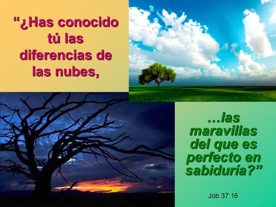 ¿Has conocido tú las diferencias de las nubes, …las maravillas del que es perfecto en sabiduría.