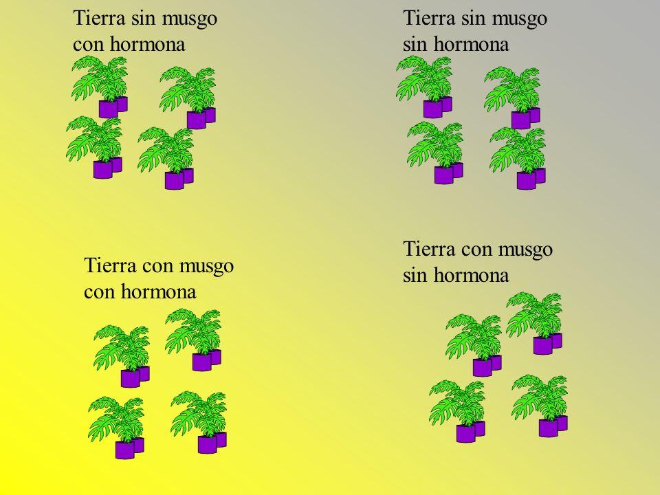 Las Hipotesis Ho1: No hay efecto en crecimiento por la presencia de musgo en el suelo en el crecimiento promedio de las plantas Ha: Hay efecto en crecimiento por la presencia de musgo en el suelo en el crecimiento promedio de las plantas Ho2:No hay efecto en crecimiento por la presencia de hormonas en el suelo.