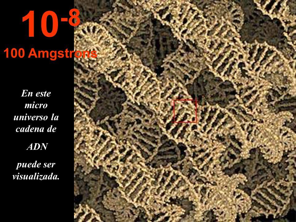 Nuevamente cambia la unidad de medida para adaptarse al minúsculo tamaño. Aparecen los cromosomas. 10 -7 1.000 Amgstrons