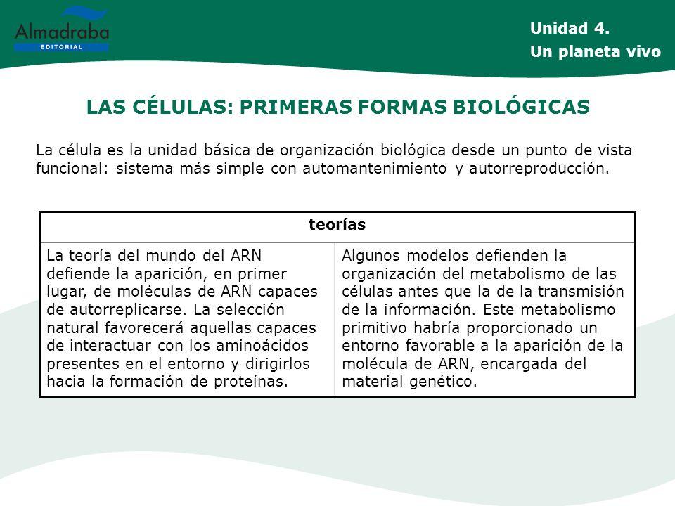 LAS CÉLULAS: PRIMERAS FORMAS BIOLÓGICAS La célula es la unidad básica de organización biológica desde un punto de vista funcional: sistema más simple