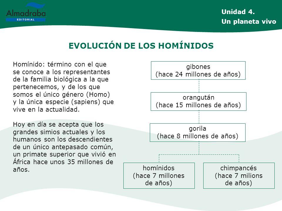 EVOLUCIÓN DE LOS HOMÍNIDOS Homínido: término con el que se conoce a los representantes de la familia biológica a la que pertenecemos, y de los que som