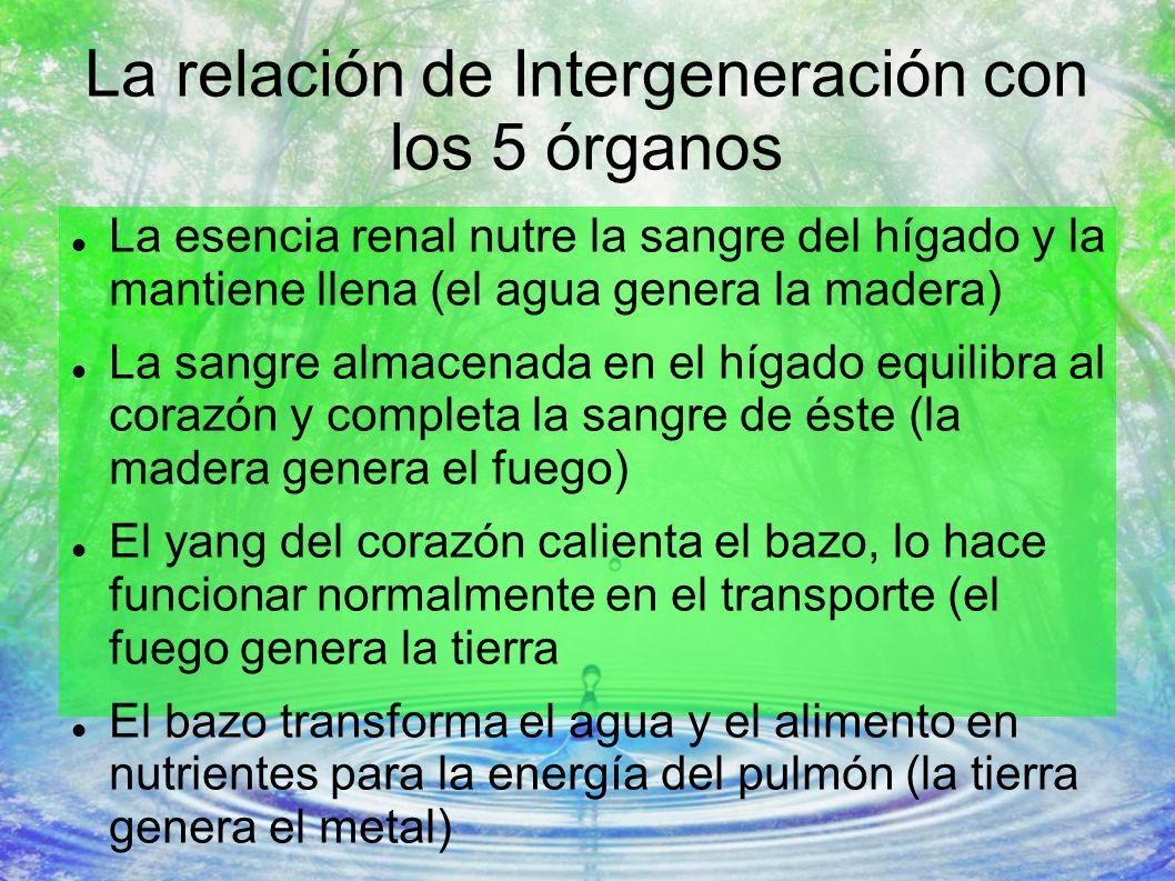La relación de Intergeneración con los 5 órganos La esencia renal nutre la sangre del hígado y la mantiene llena (el agua genera la madera) La sangre