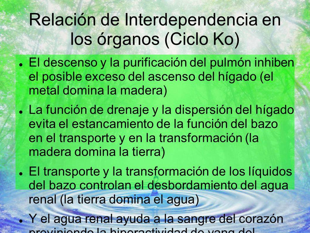 Relación de Interdependencia en los órganos (Ciclo Ko) El descenso y la purificación del pulmón inhiben el posible exceso del ascenso del hígado (el m