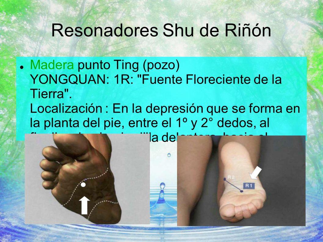 Resonadores Shu de Riñón Madera punto Ting (pozo) YONGQUAN: 1R: