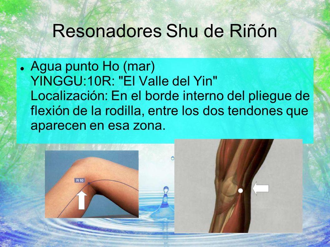 Resonadores Shu de Riñón Agua punto Ho (mar) YINGGU:10R: