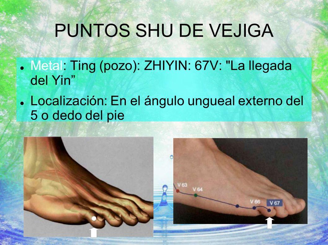 PUNTOS SHU DE VEJIGA Metal: Ting (pozo): ZHIYIN: 67V: