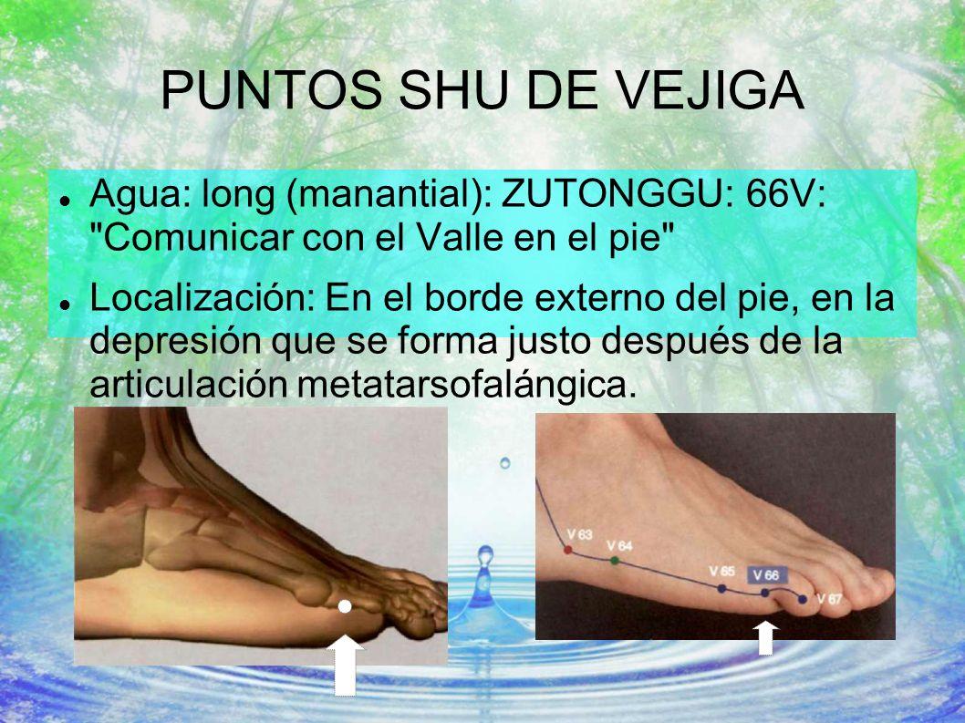 PUNTOS SHU DE VEJIGA Agua: long (manantial): ZUTONGGU: 66V: