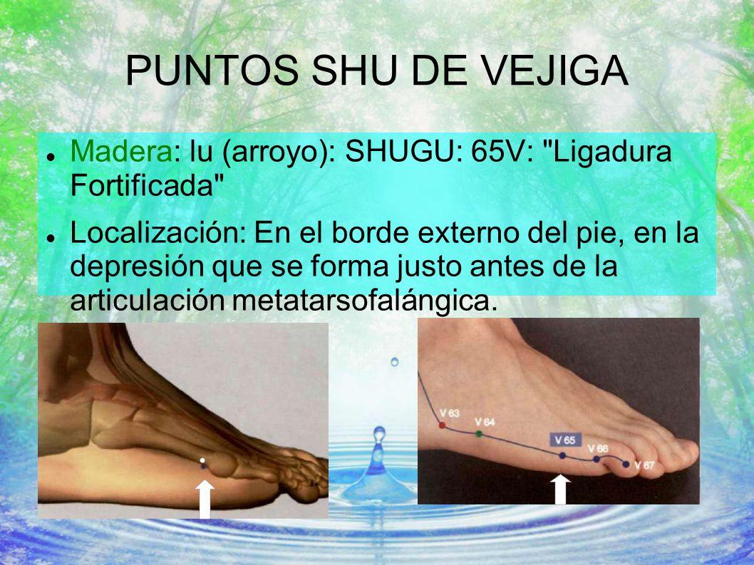 PUNTOS SHU DE VEJIGA Madera: lu (arroyo): SHUGU: 65V:
