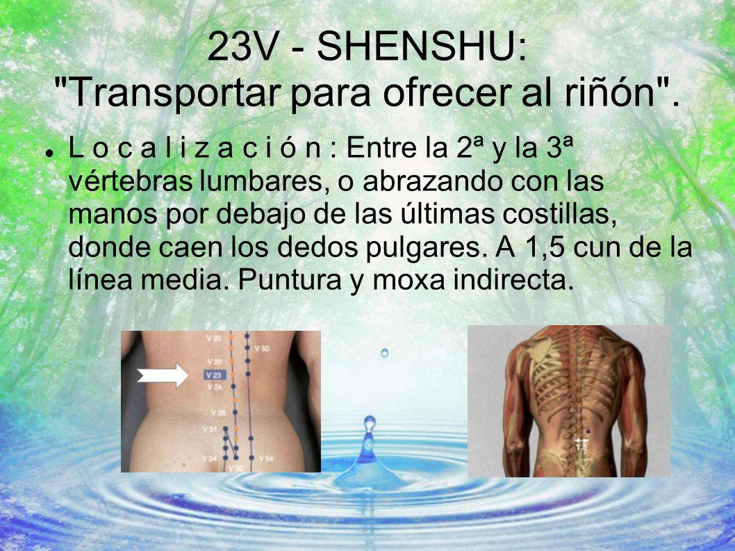 23V - SHENSHU: