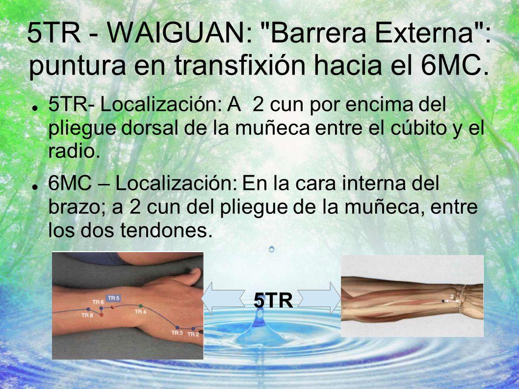5TR - WAIGUAN:
