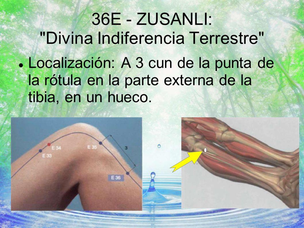 36E - ZUSANLI: