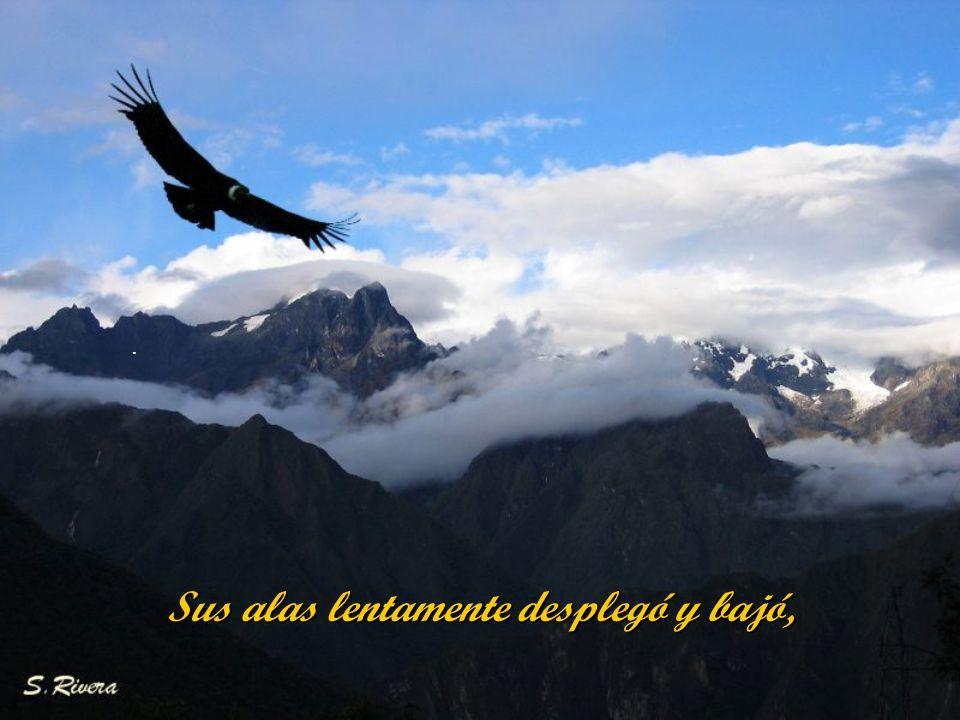 El cóndor de los Andes despertó, con la luz de un feliz amanecer.