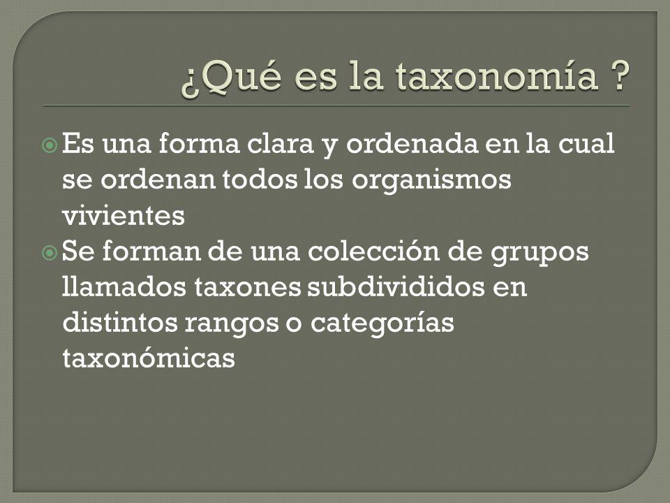 Es una forma clara y ordenada en la cual se ordenan todos los organismos vivientes Se forman de una colección de grupos llamados taxones subdivididos