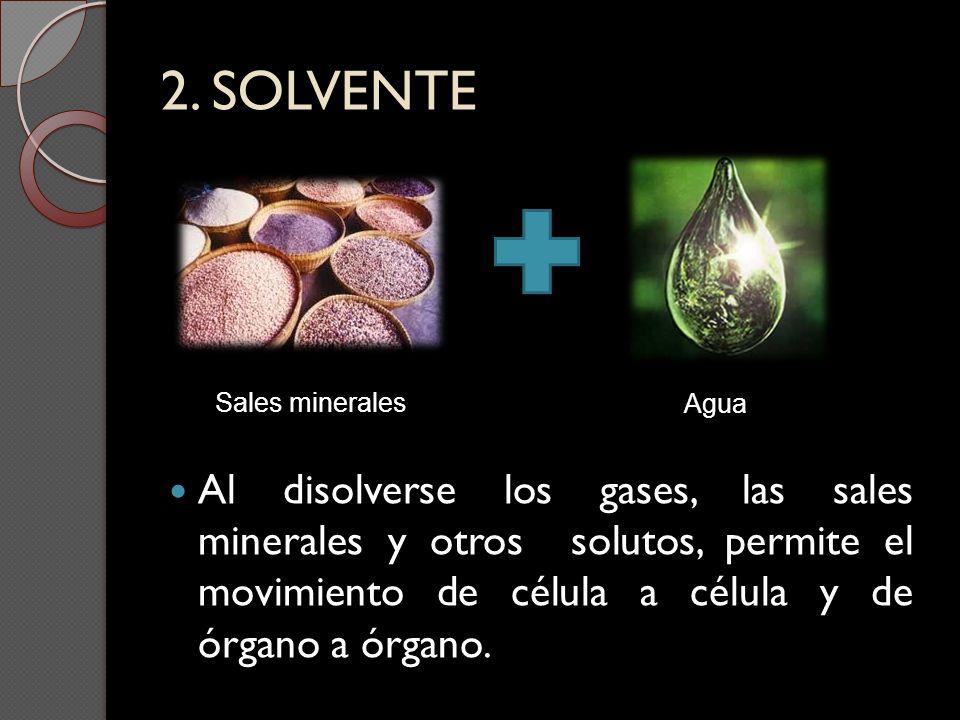 2. SOLVENTE Sales minerales Agua Al disolverse los gases, las sales minerales y otros solutos, permite el movimiento de célula a célula y de órgano a