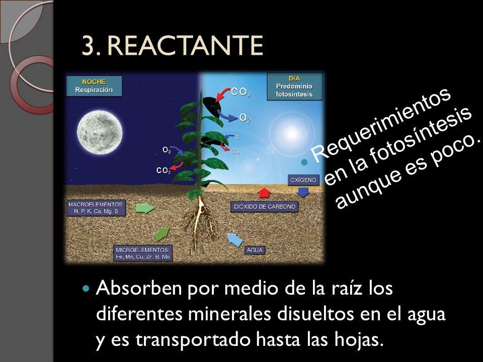 3. REACTANTE Absorben por medio de la raíz los diferentes minerales disueltos en el agua y es transportado hasta las hojas. Requerimientos en la fotos
