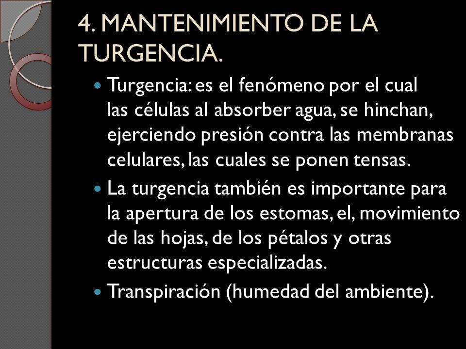 4. MANTENIMIENTO DE LA TURGENCIA. Turgencia: es el fenómeno por el cual las células al absorber agua, se hinchan, ejerciendo presión contra las membra