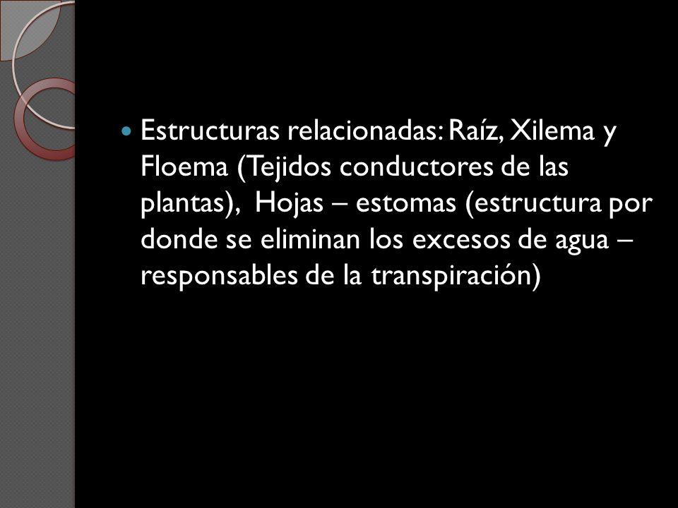 Estructuras relacionadas: Raíz, Xilema y Floema (Tejidos conductores de las plantas), Hojas – estomas (estructura por donde se eliminan los excesos de
