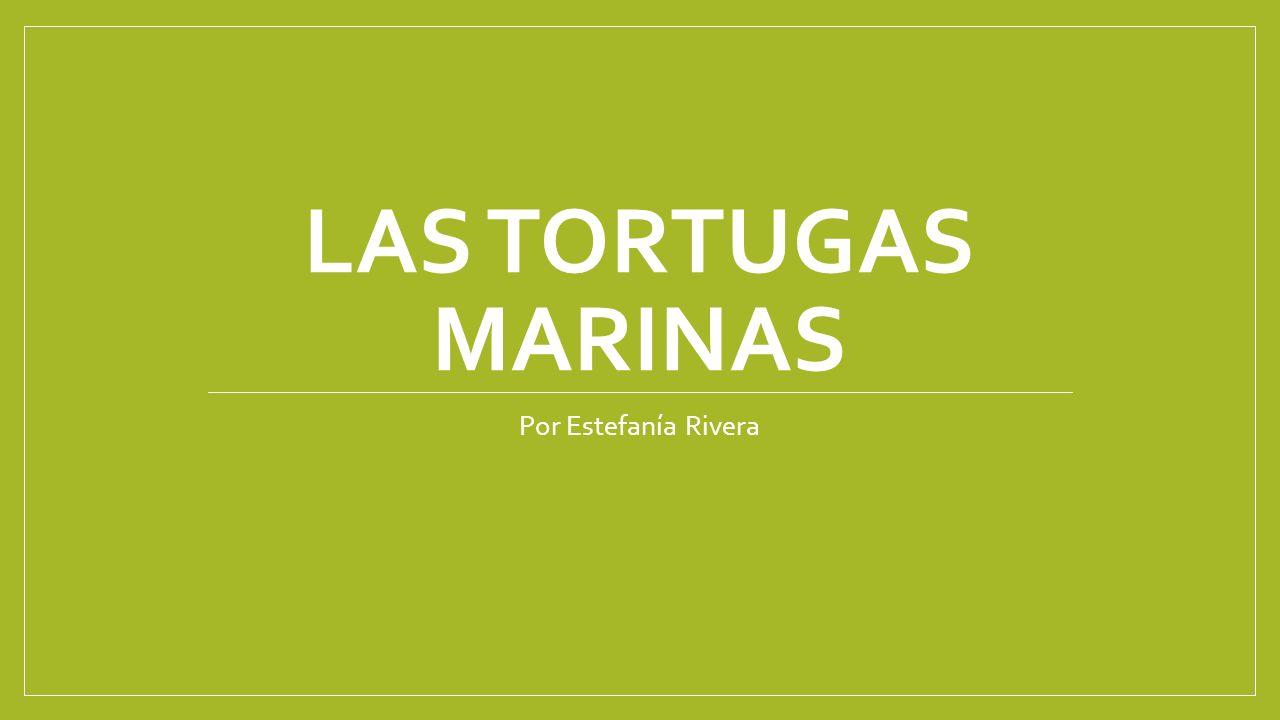 LAS TORTUGAS MARINAS Por Estefanía Rivera