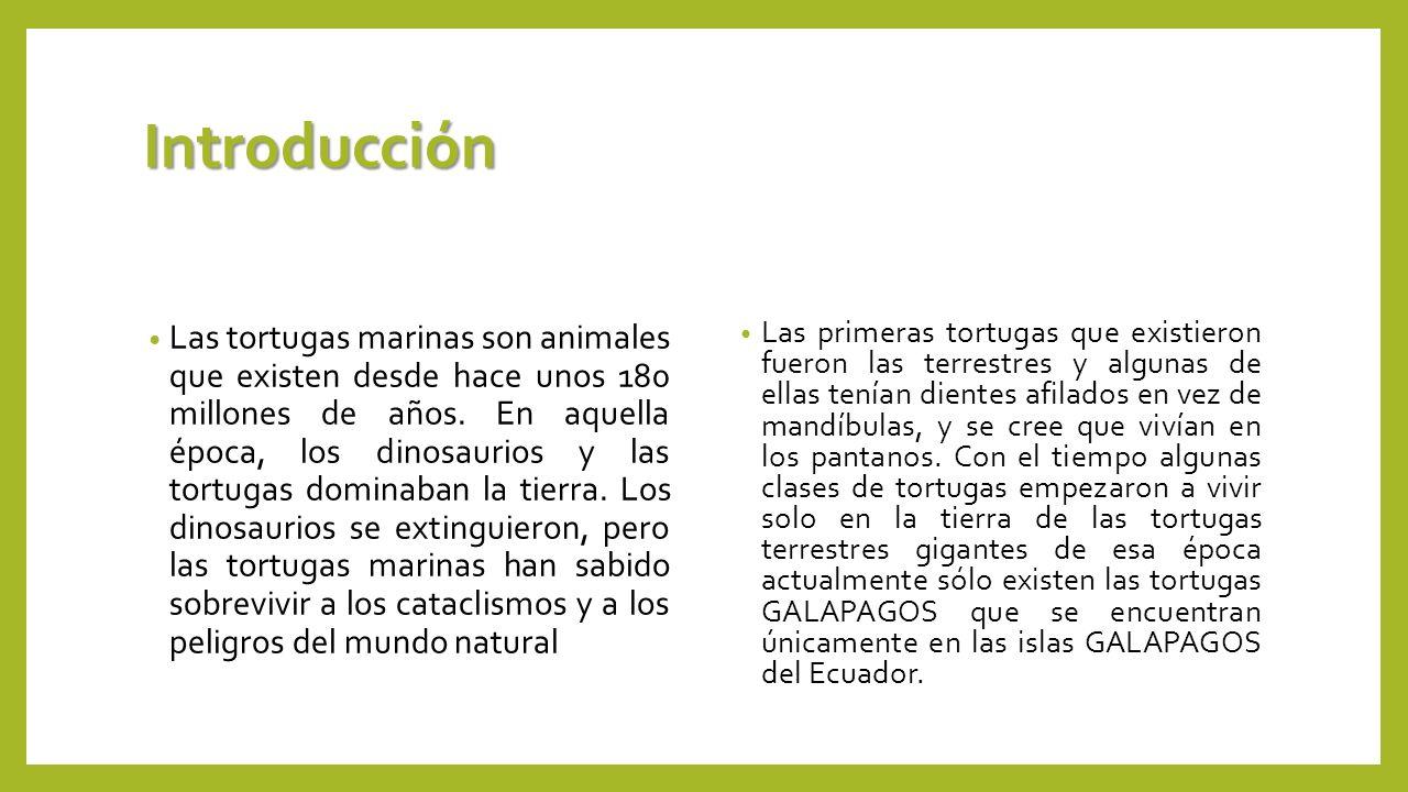 Introducción Las tortugas marinas son animales que existen desde hace unos 180 millones de años. En aquella época, los dinosaurios y las tortugas domi
