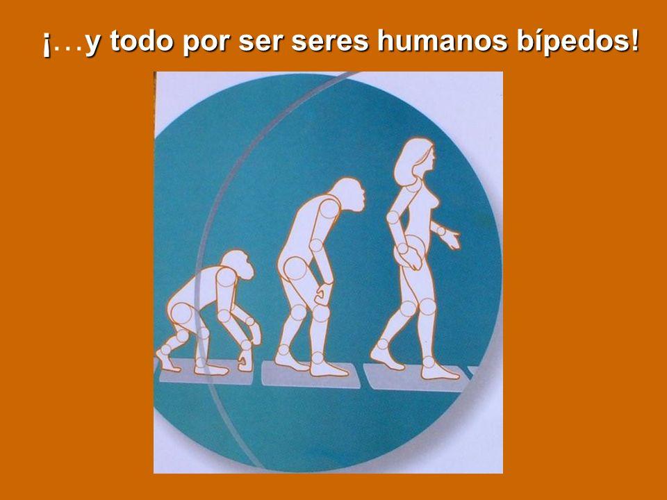 ¡ y todo por ser seres humanos bípedos! ¡… y todo por ser seres humanos bípedos!