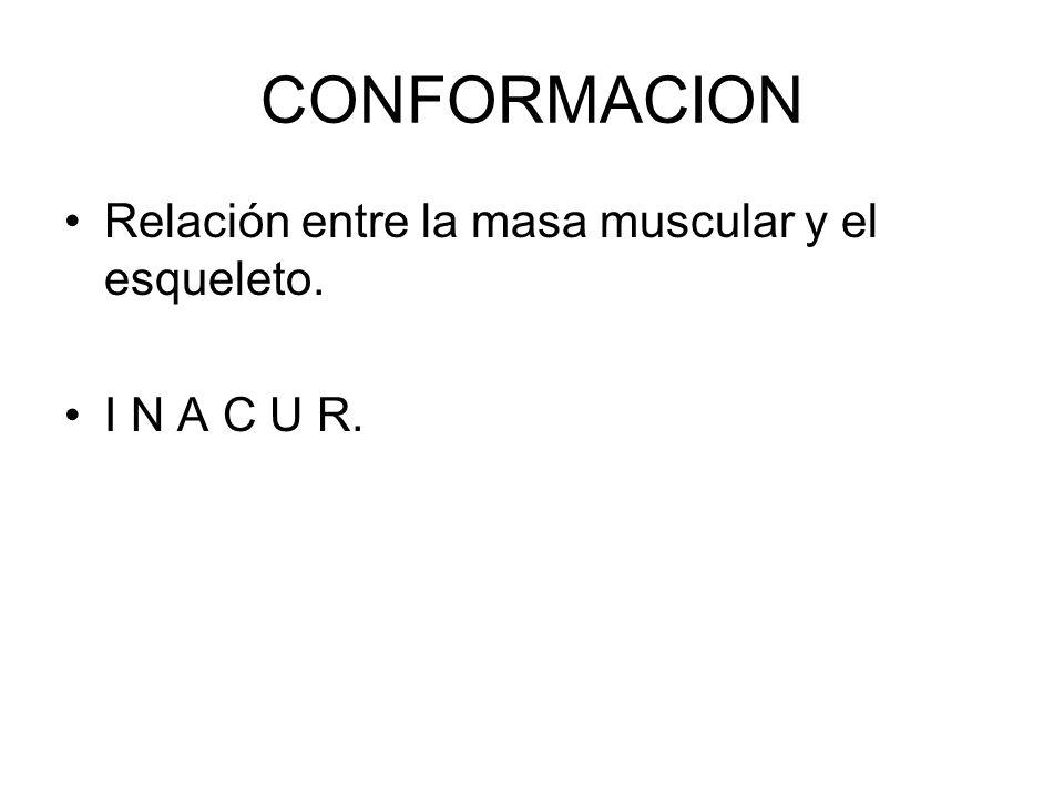 CONFORMACION Relación entre la masa muscular y el esqueleto. I N A C U R.