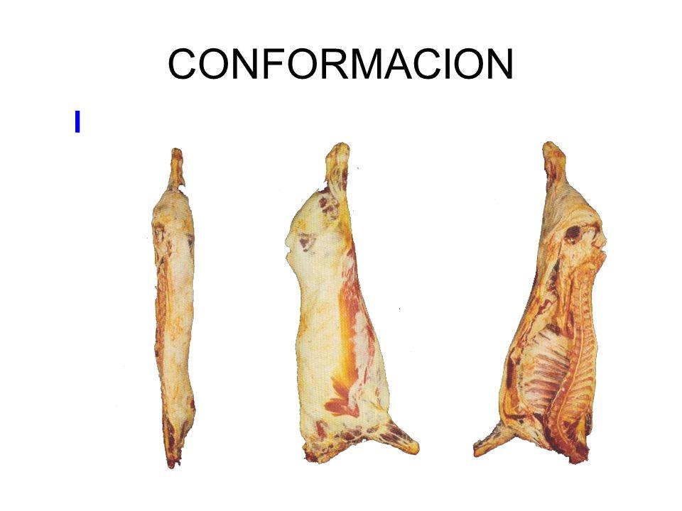 CONFORMACION I