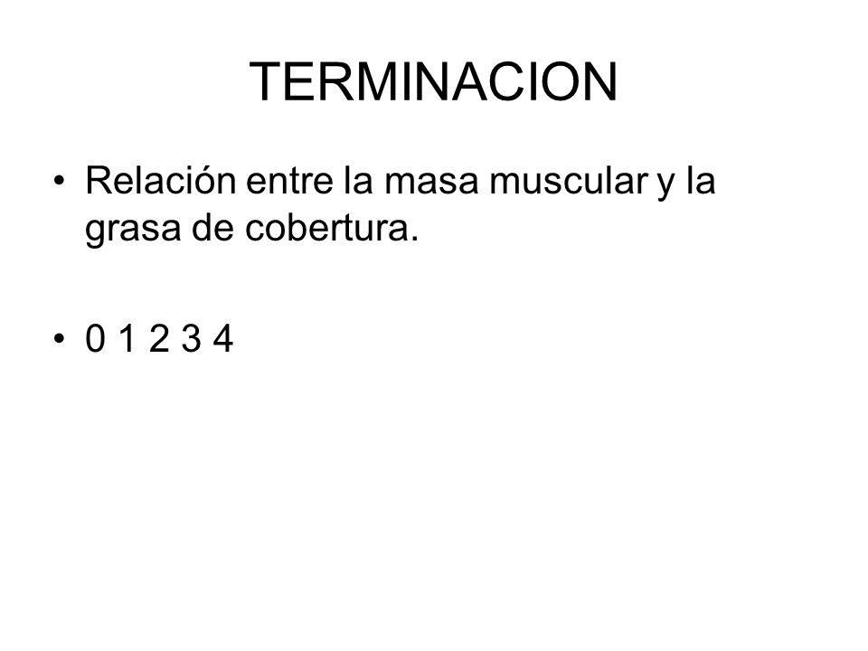 TERMINACION Relación entre la masa muscular y la grasa de cobertura. 0 1 2 3 4