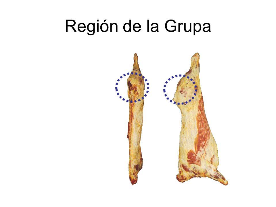 Región de la Grupa
