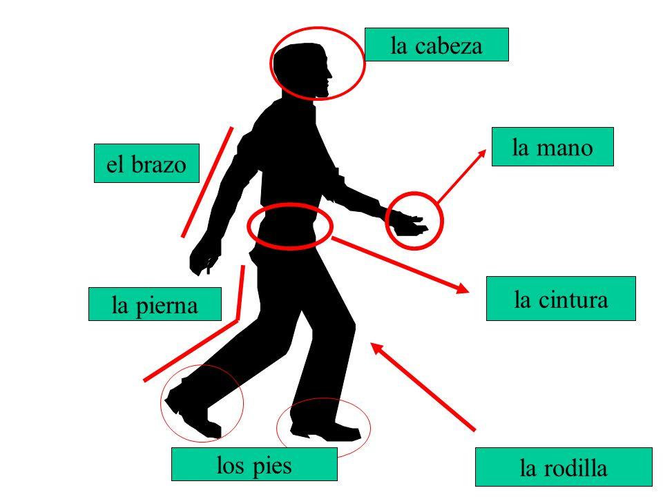 El brazo la mano los pies la cabeza la pierna la rodilla la cintura el brazo