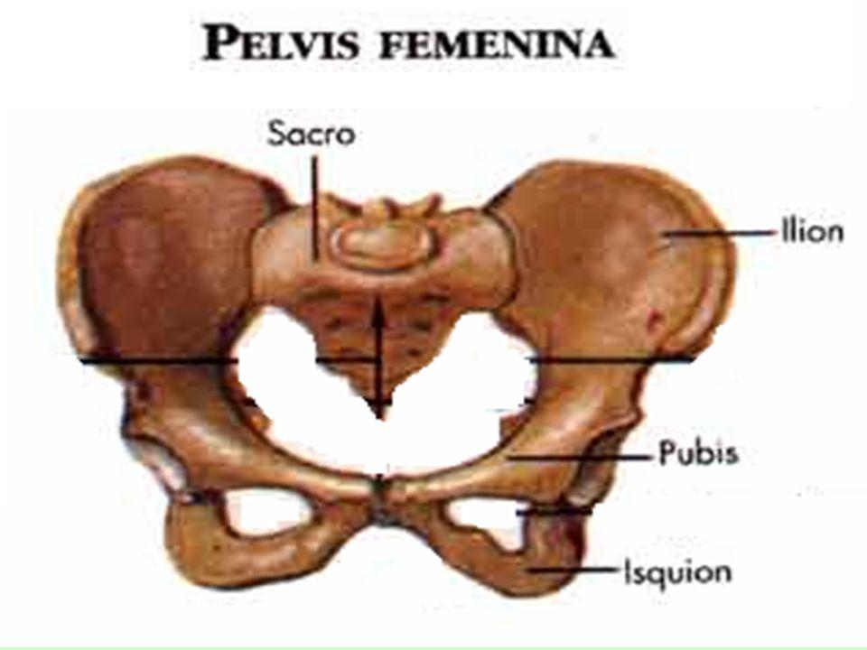 Extremidades Las extremidades en el cuerpo humano son: Los brazos (Extremidades superiores) Las piernas (Extremidades inferiores)
