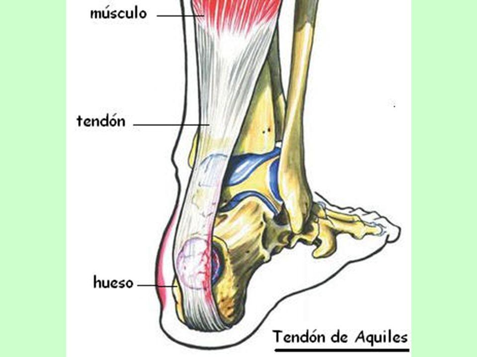 Gracias a la colaboración entre huesos y músculos, el cuerpo humano mantiene su postura, puede desplazarse y realizar múltiples acciones.