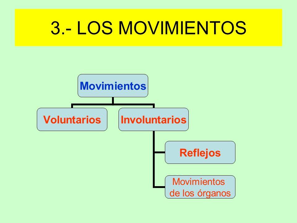 Movimientos voluntarios