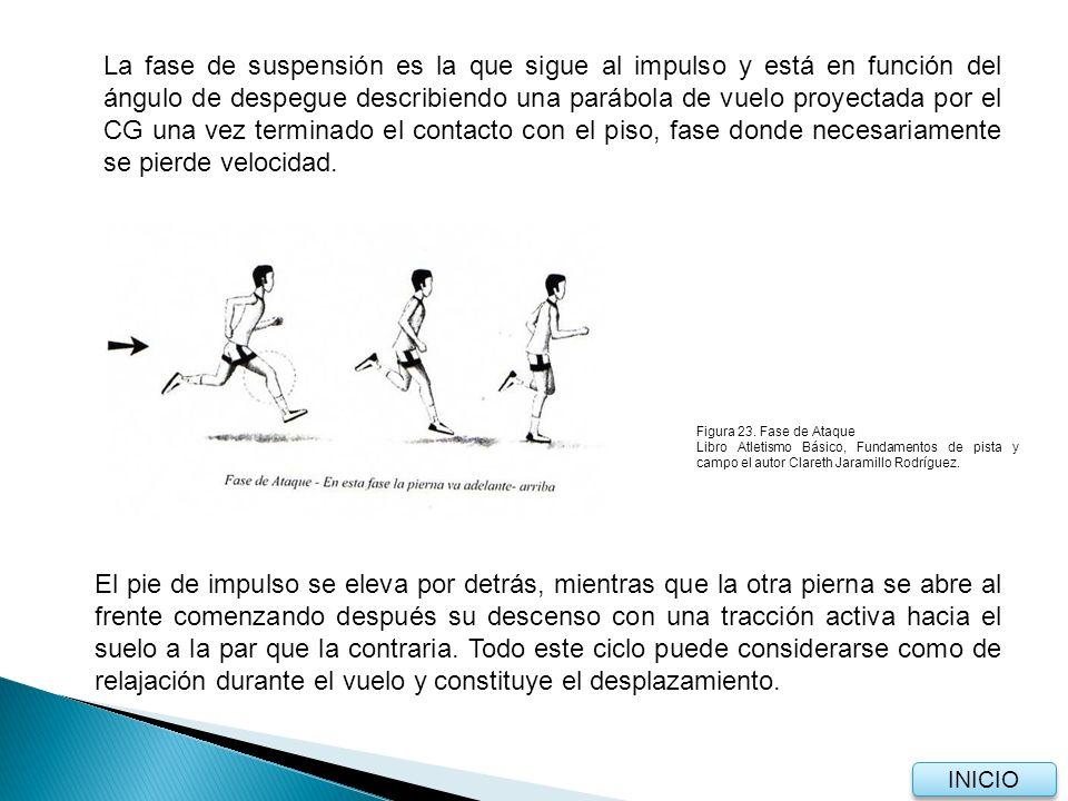 4.1.3 Apoyo Cuando el pie hace contacto con el suelo, lo hace con la parte externa del metatarso descendiendo elásticamente hasta apoyarse en el suelo (según la velocidad de la carrera) al tiempo que se flexiona la rodilla opuesta avanza flexionándose casi por completo (depende también de la acción de la cadera), hasta sobrepasar la pierna de apoyo (al igual que el CG, continuando el movimiento al frente durante este periodo en que la pierna de apoyo pasa a ser la de impulso.