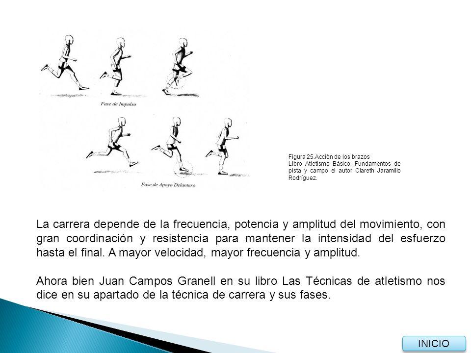 La carrera depende de la frecuencia, potencia y amplitud del movimiento, con gran coordinación y resistencia para mantener la intensidad del esfuerzo hasta el final.