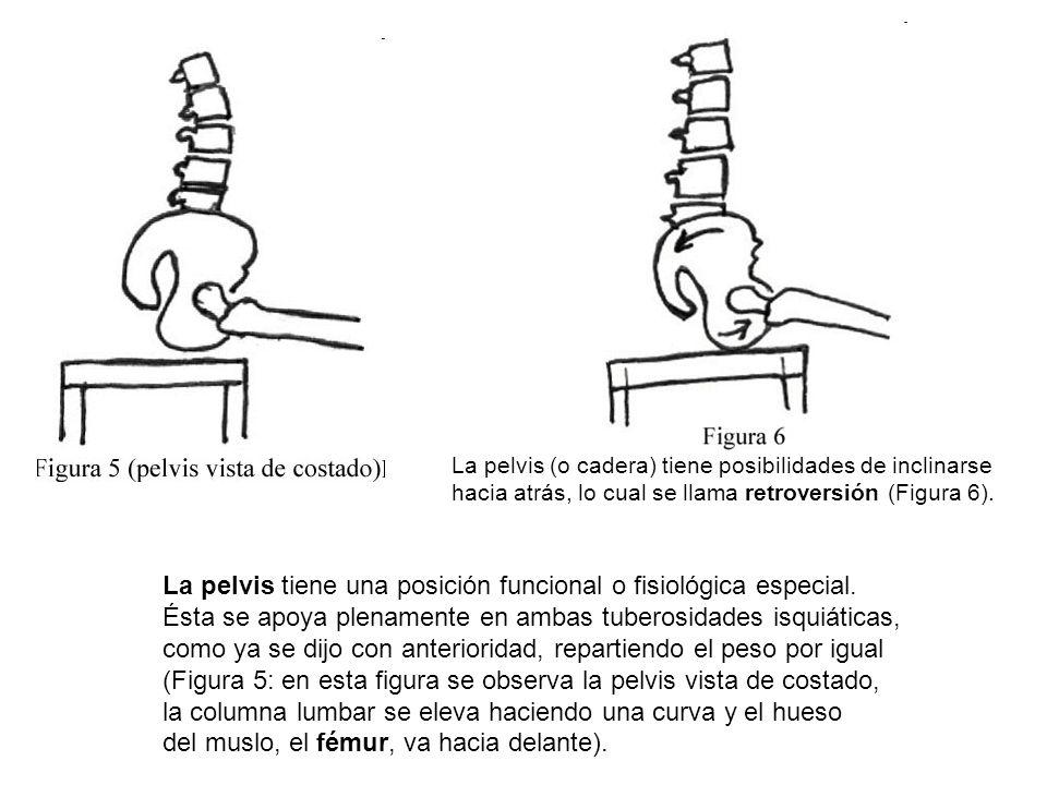 La pelvis tiene una posición funcional o fisiológica especial.