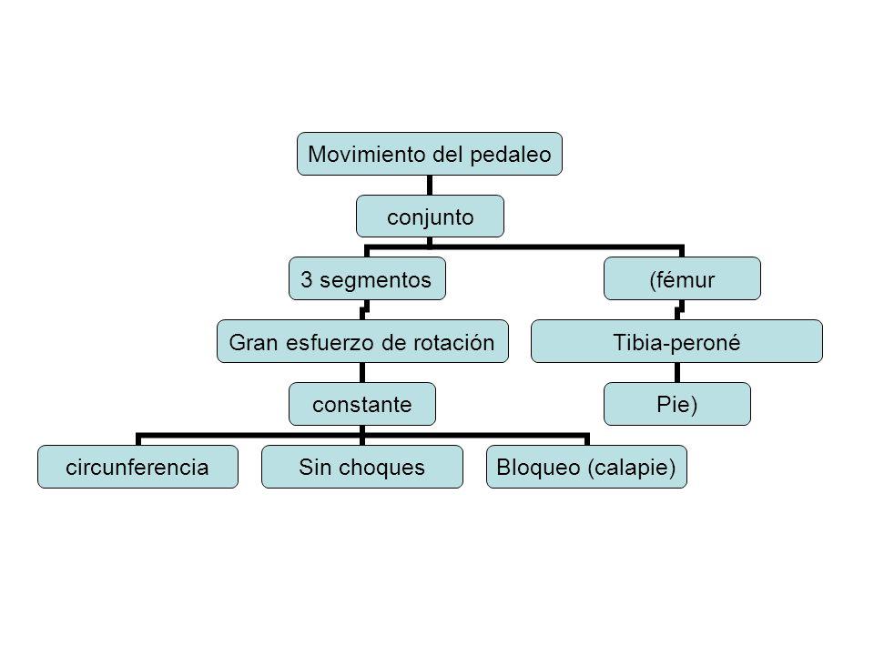 Movimiento del pedaleo conjunto 3 segmentos Gran esfuerzo de rotación constante circunferenciaSin choques Bloqueo (calapie) (fémur Tibia-peroné Pie)