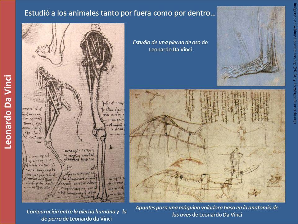 Comparación entre la pierna humana y la de perro de Leonardo da Vinci Leonardo Da Vinci Estudio de una pierna de oso de Leonardo Da Vinci Imágenes en