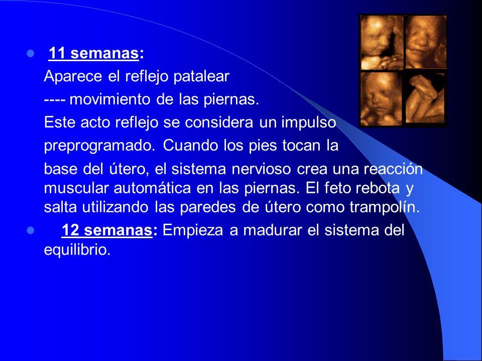 Desarrollo de prensión por meses: Desde el nacimiento hasta el cuarto mes: Aparece primero la conducta de prensión.